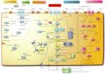 lipid-metabolism